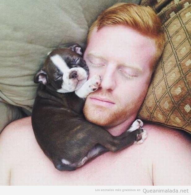 Foto bonita dormir con cachorro bulldog francés