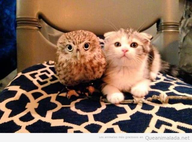 Foto bonita de un buho y un gatos
