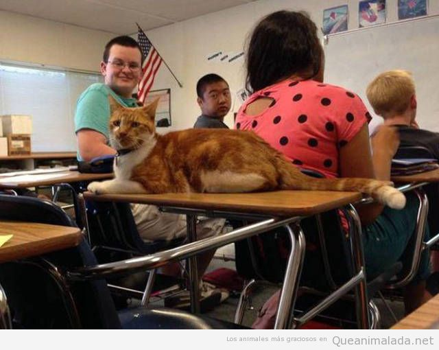 Foto graciosa gato en un aula