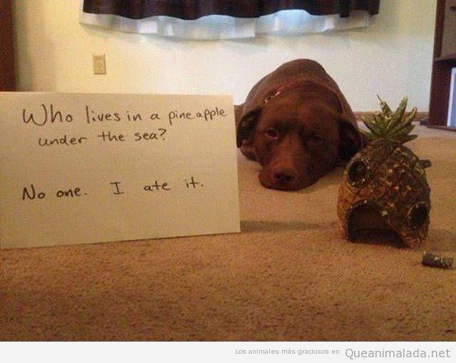 Foto graciosa perro con una piña que se ha comido
