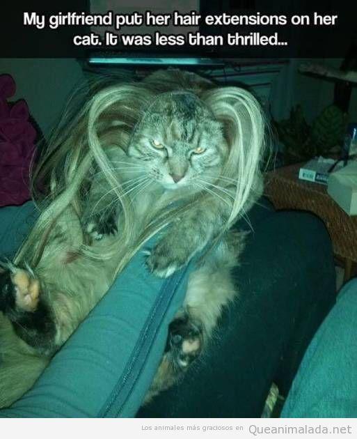 Foto graciosa de un gato con extensiones