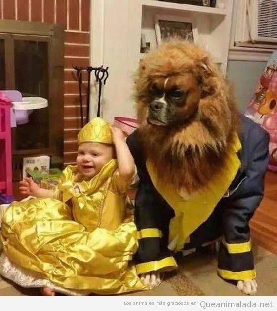 Disfraz gracioso de niña y perro, La bella y la bestia