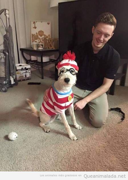 Perro disfrazado de Busco a Wally