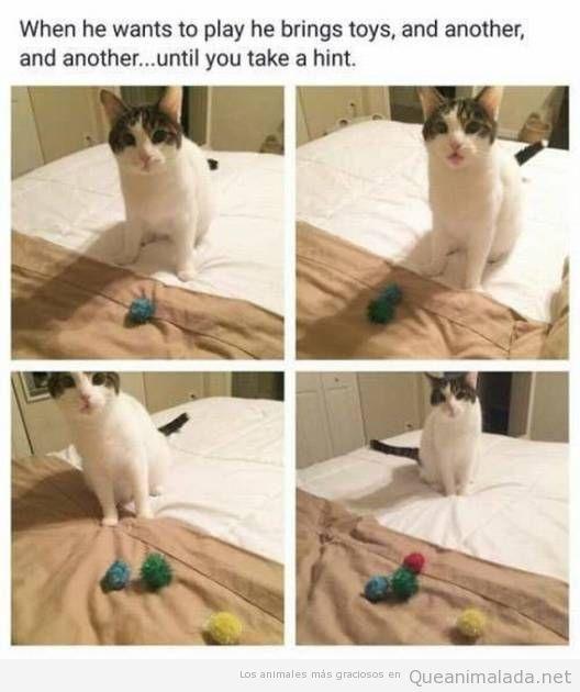 Fotos graciosas de gato que quiere jugar