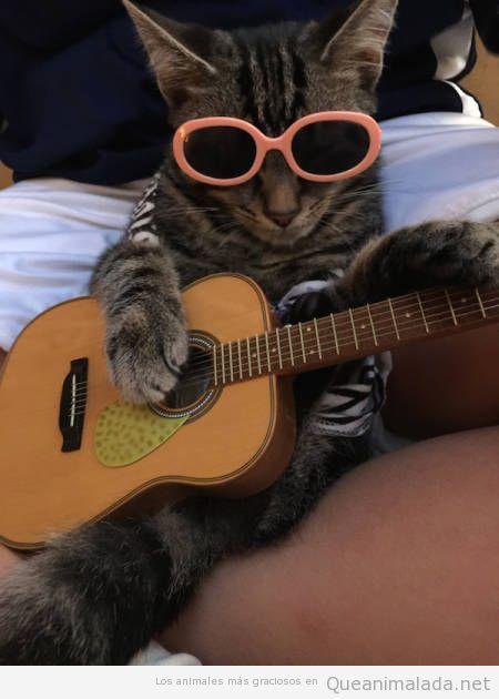 Foto graciosa de un gato tocando la guitarra