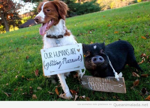 Invitación boda con foto de perro y cerdo
