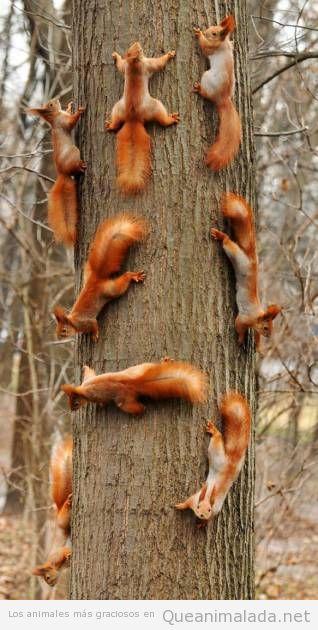 Foto graciosa de ardillas en un tronco de un árbol