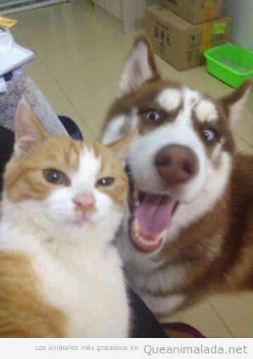 Selfie gracioso de un gato y un perro