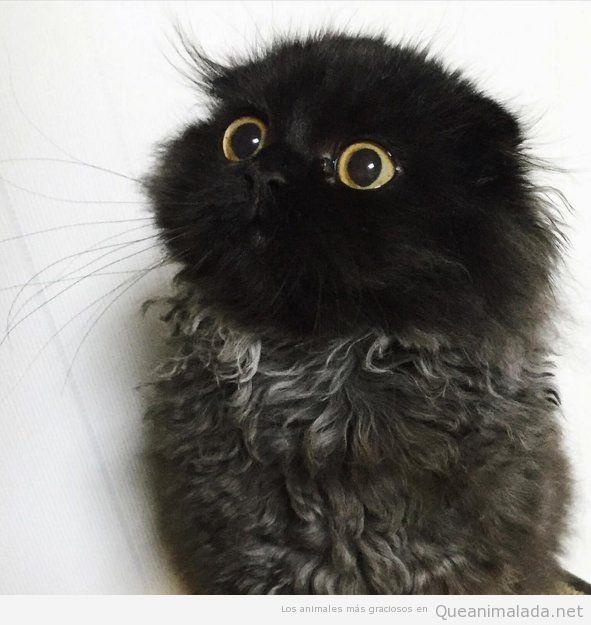 Foto bonita gato con ojos adorables