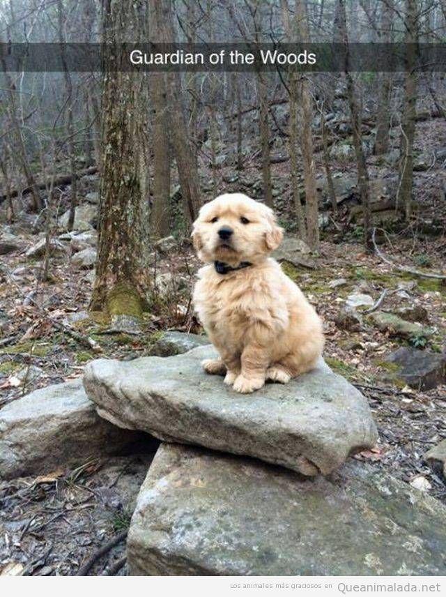 Foto graciosa cachorro de Golden en el bosque