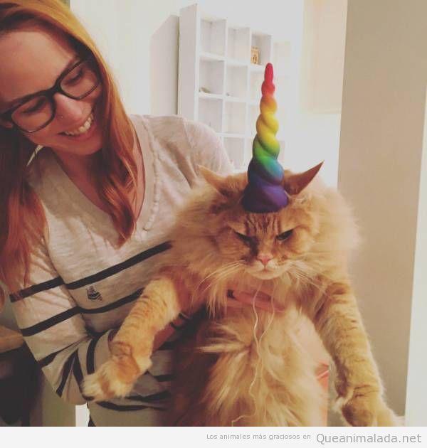 Foto graciosa gato enfadado con unicornio