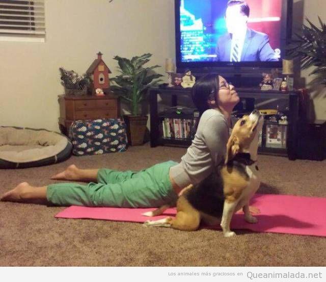 Ternura e inteligencia animal Foto-graciosa-perro-yoga