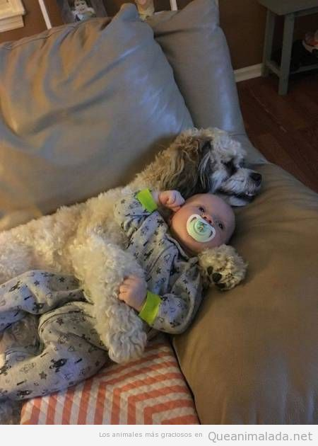 Foto bonita perro cuidando a un bebé