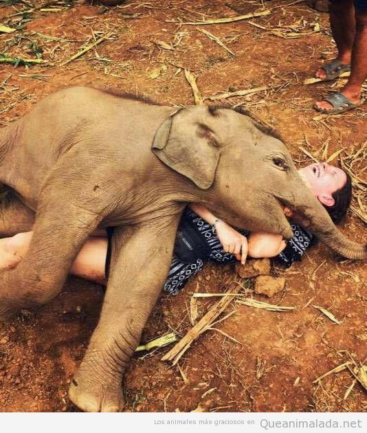 Foto bonita elefante bebé encima de un turista
