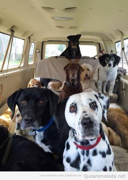 Foto bonita furgoneta llena perros