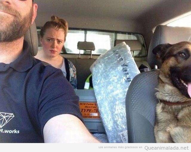 Foto graciosa novia y perro en el coche