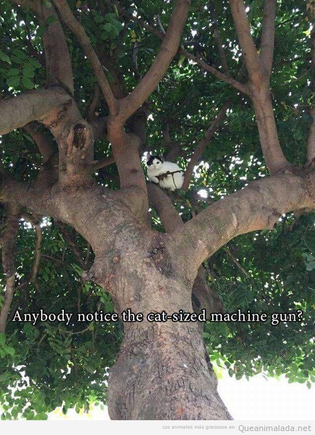 Foto graciosa gato con un arma