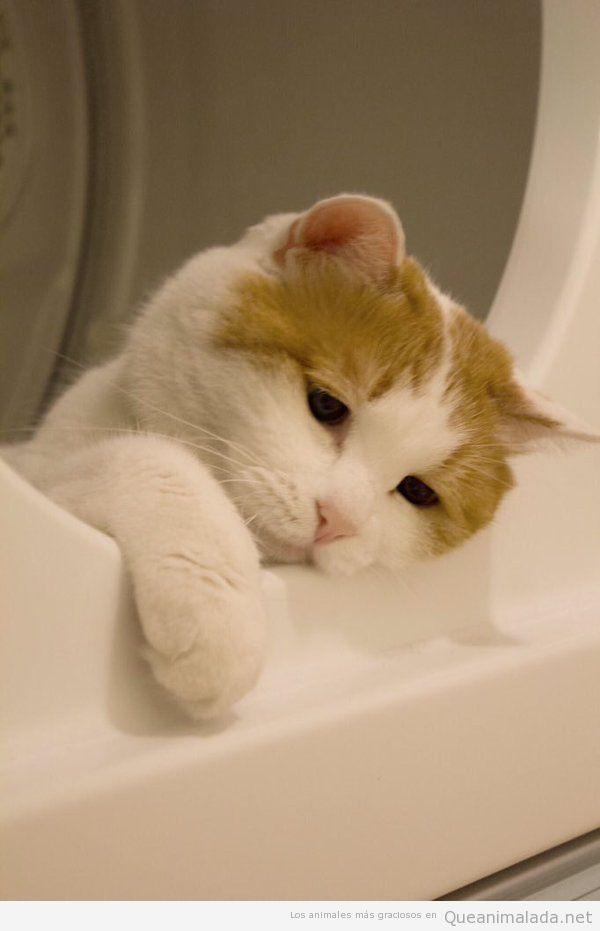 Foto graciosa gato triste dentro lavadora
