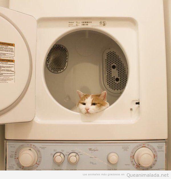 Foto graciosa gato triste dentro lavadora 2