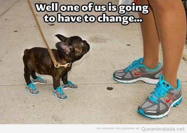 Foto graciosa perro zapatillas deportivas