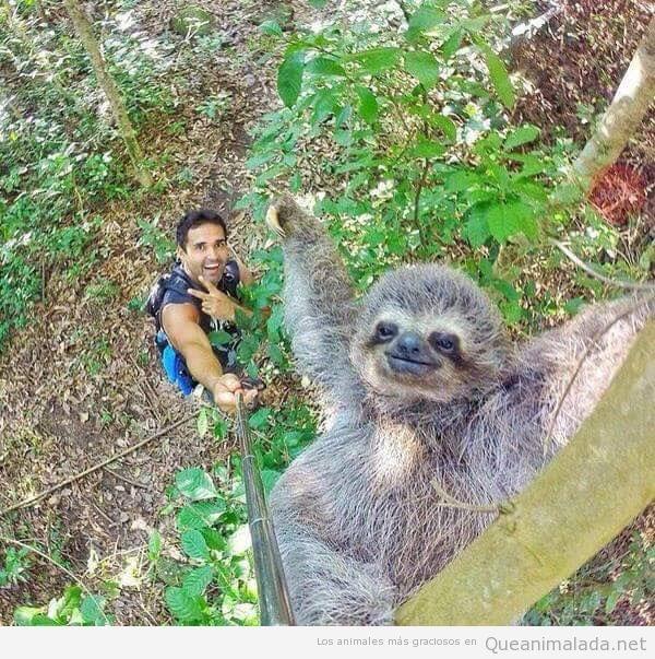 Foto graciosa, selfie con un perezoso