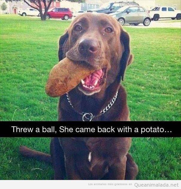 Snapchat gracioso perro con una patata