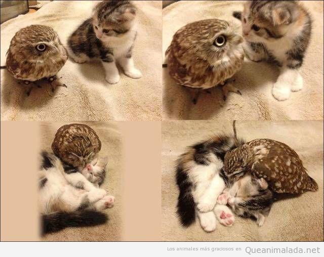 Foto bonita de un gatito y un búho