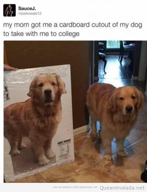 Foto graciosa, perro de cartón para llevarte a la universidad