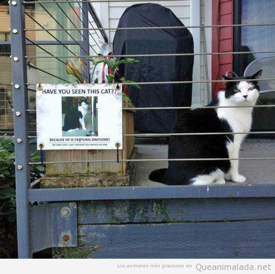 Foto divertida cartel de gato