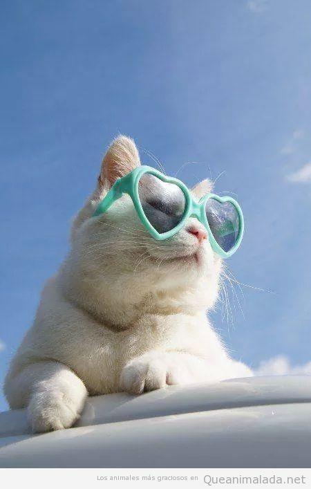 Foto graciosa gato gafas corazón Lolita
