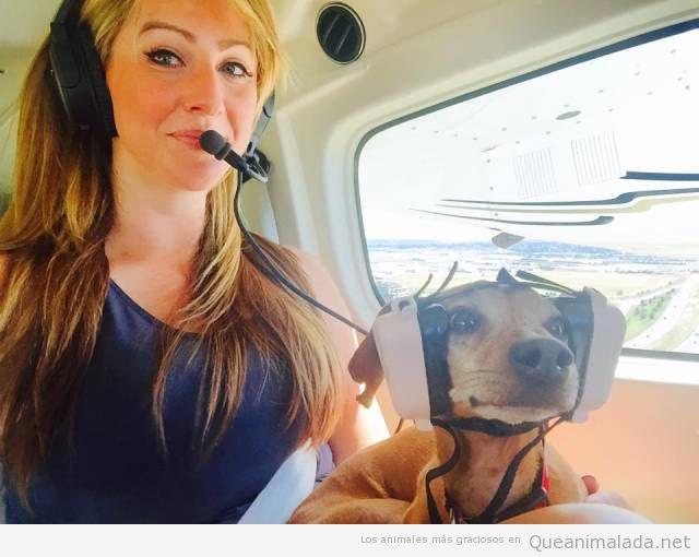 Foto graciosa perro aviador con cascos