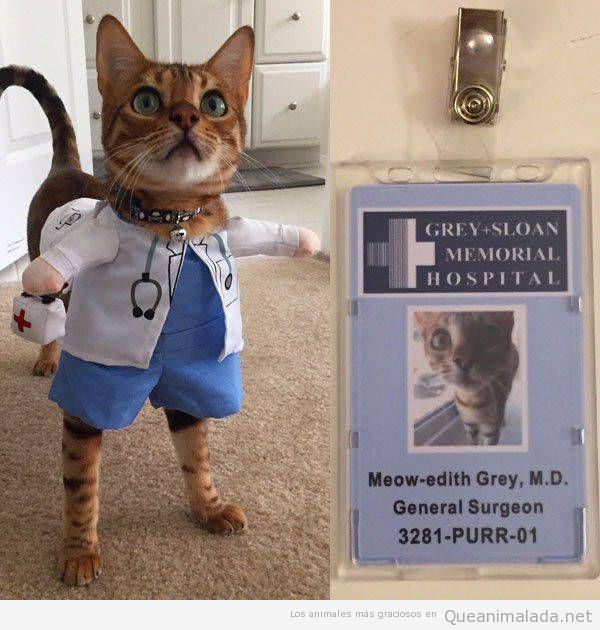 Gata con disfraz de Meredith de Anatomía de Grey