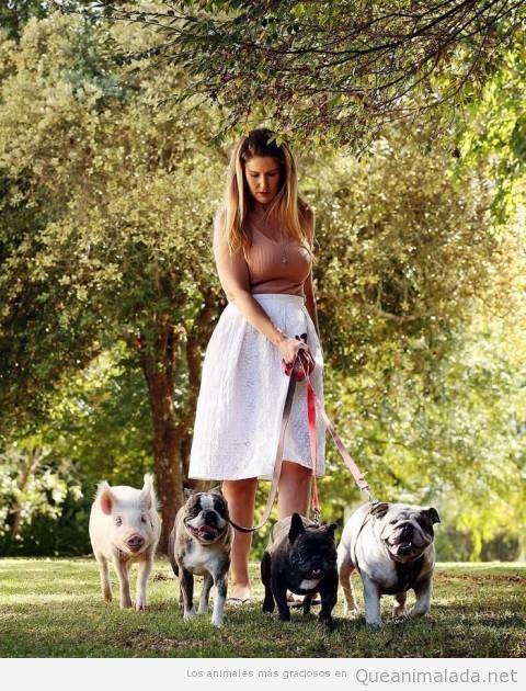 Foto graciosa pasear a perros y a un cerdo