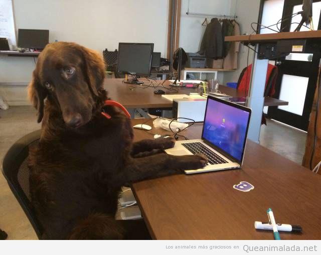 Foto graciosa de perro tecleando en ordenador