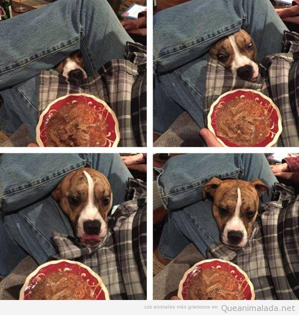Foto graciosa de perro mirando comida
