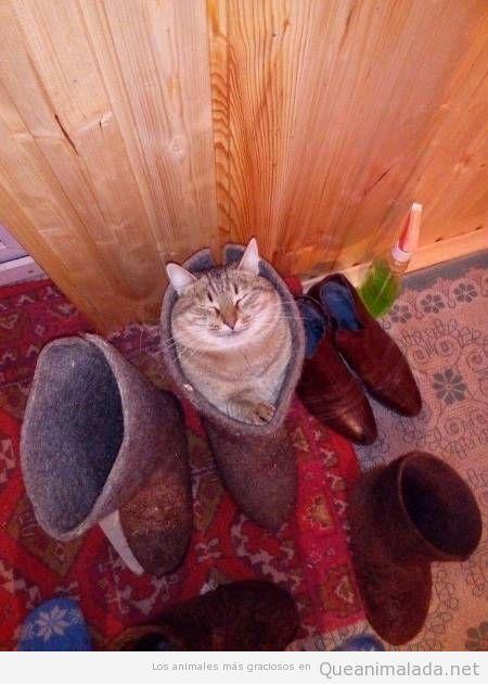 Foto graciosa gato metido en una bota