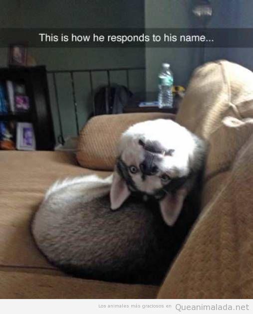 Foto divertida perro cabeza del revés