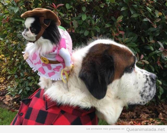 Foto graciosa de un perro grande y otro pequeño disfrazados