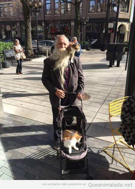 Foto bonita hombre con gatos en un carrito de bebé