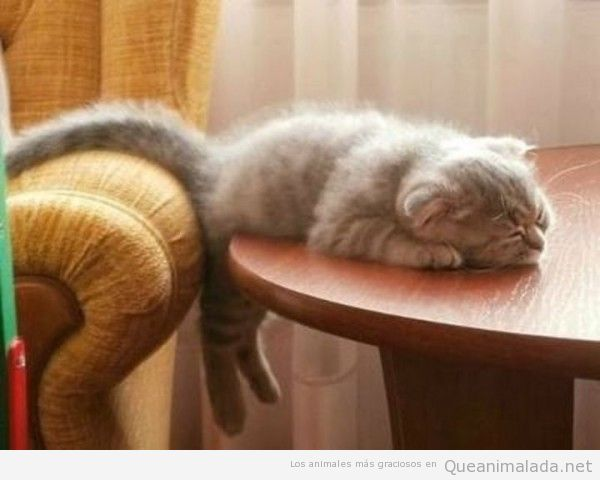 Fotos divertidas de gatos durmiendo en posturas extrañas 4
