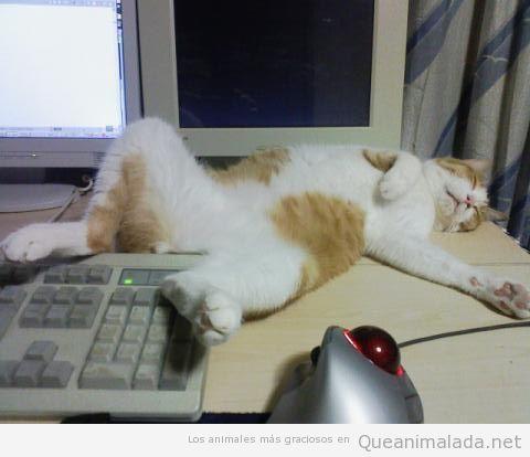Fotos divertidas de gatos durmiendo en posturas extrañas 3