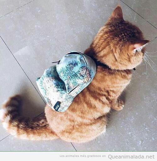 Foto graciosa gato con mochila de mapamundi