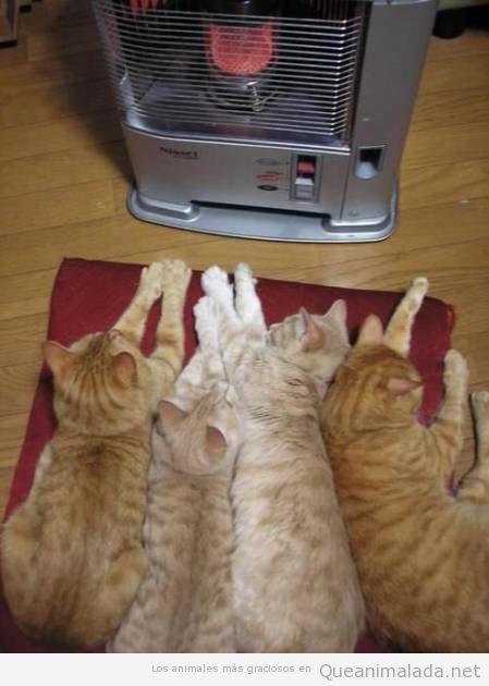 Foto bonita y graciosa de gatos delante de la estufa