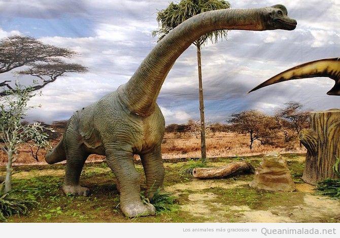 Brachiosaurus dinosaurio grande 2