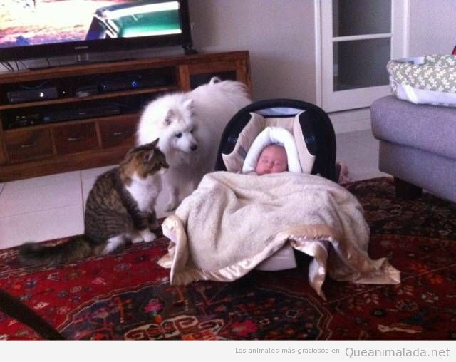 Foto bonita de perro y gato cuidando bebé