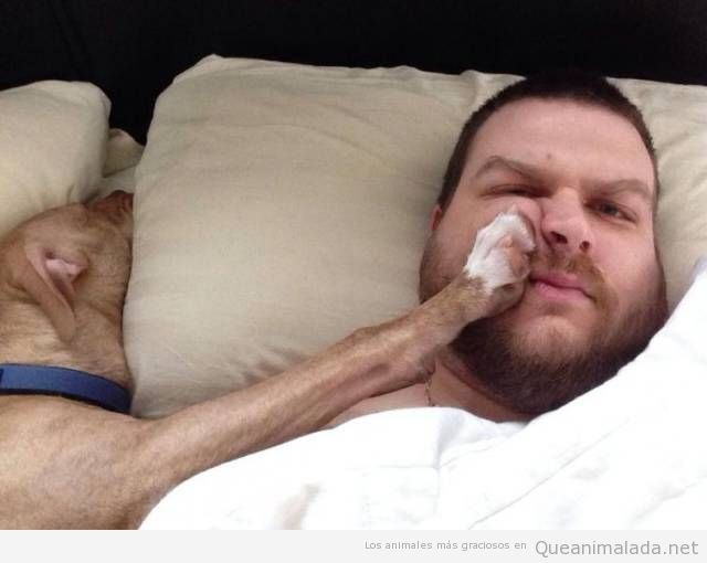 Foto divertida dormir perro