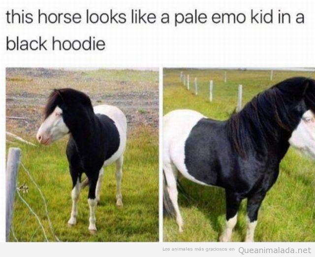 Caballo blanco y negro parecido razonable chico emo