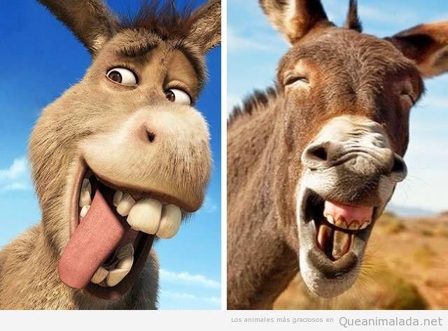 Animales de dibujos animados y sus dobles en la vida real