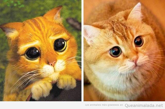 Animales de dibujos animados y sus dobles en la vida real 3