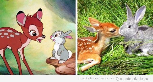 Animales de dibujos animados y sus dobles en la vida real 4